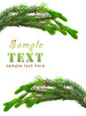 The green spruce branches Royalty Free Stock Photo