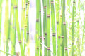 Green stalks Royalty Free Stock Photo