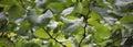Green stillness Royalty Free Stock Photo