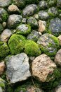 Green stone are covered by moss in the wild Stock Photo