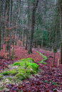 Green stone furrow in a forest in bavaria wonder of nature overgrown with moss picture was taken on late december afternoon Stock Photos