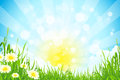 Green Summer Background Royalty Free Stock Photography