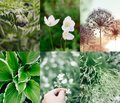 stock image of  Green summer collage plants and flowers