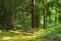 Green summer forest with bench Royalty Free Stock Photo