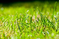 Green Summer grass - macro Royalty Free Stock Images