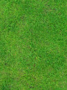 Green summer grass texture Stock Image