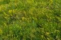 Green Summer Meadow. Rural Nat...