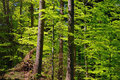Green sunny forest Royalty Free Stock Images