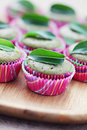 Green tea muffins Stock Images