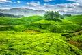 Green tea plantations in India Royalty Free Stock Photo