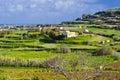 Green terraced meadows, Malta Royalty Free Stock Photo