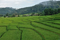 Green terraced rice field in chiangmai thailand Stock Photography