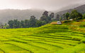 Green terraced rice field in chiangmai thailand doi inthanon national park Royalty Free Stock Photography
