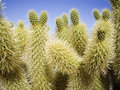 Green thorny cacti cactus with many spines Stock Photo