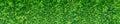 Green thuja hedge Royalty Free Stock Photo