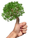 Green thumb and fingers environment and conservation concept with a tree growing from the hand while gesturing ok as a symbol of Stock Image