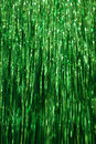 Green Tinsel Background