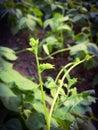 The Green Tiny Plant