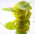 Green tomato and Basil Royalty Free Stock Images