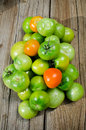 Green tomatoes freshly picked ready for canning pickling Royalty Free Stock Photo