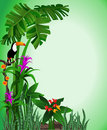 Green Toucan Background Stock Photo