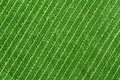 Green Towel Texture Royalty Free Stock Image