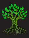 Green tree. Royalty Free Stock Photos