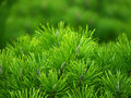 Green tree background Stock Photo