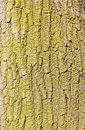 Green tree bark texture Royalty Free Stock Image
