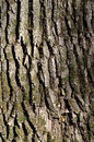 Green tree bark texture closeup details of vertical photo of a with different shapes on it Stock Photo