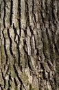 Green tree bark texture Royalty Free Stock Photo