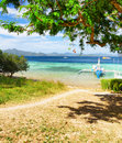Green tree on the beach malcapuya island philippines Stock Photo