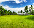 Green tree on the beach malcapuya island philippines Royalty Free Stock Photo
