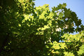 Green tree brances frame corner with blue sky and sun flare in background Stock Photos