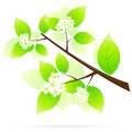 Green Tree Branch Icon Royalty Free Stock Images