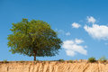 Green tree on edge of sand pit the background blue sky Stock Photos