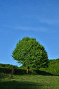 Green tree on a hill on a sunny day Stock Images