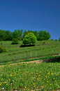 Green tree on a hill on a sunny day Royalty Free Stock Image