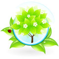 Green tree icon leaves ladybird Stock Images