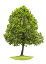 Green Tree Isolated On White B...