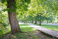Green tree lined path in park a a with beautiful old growth trees with leaves Stock Photos