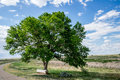 Green tree with log bench under blue sky Royalty Free Stock Photo
