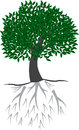 Green tree with root illustration of is isolated on white background created in illustrator software Stock Photography
