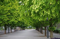 Green tree sidewalk Royalty Free Stock Photo