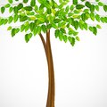 Green tree vector illustration of tall Royalty Free Stock Photos