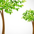 Green tree vector illustration of tall Stock Photography