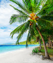 Green tree on  white sand beach Stock Image
