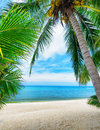 Green tree on a white sand beach Royalty Free Stock Photo