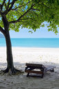 Green tree on a white sand beach Stock Photo