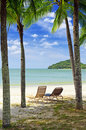 Green tree on white sand beach Stock Photos